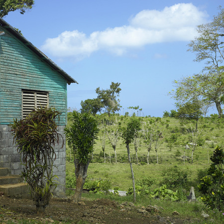 topics: Plants and trees grow near a home in the topics on a lush hillside