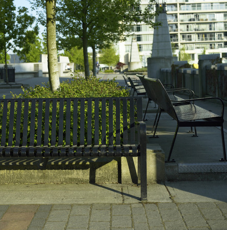 Black metal park benches near a concrete path, hedge and tree in an urban setting