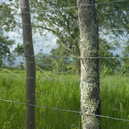 Barbed wire connected to tree posts near a lush green field