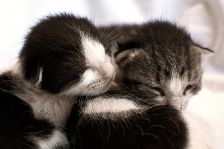 Two newly born kittens laying on bed photo