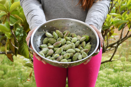 A woman holding a bowl with fresh green almonds washed and salted.