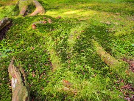 liverwort: Moss, lichen and liverwort growing on the ground