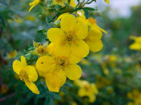 bright eyed: Yellow flower background Stock Photo