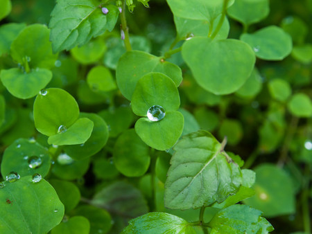 grass close up: Close up of dew droplets on green leaves Stock Photo