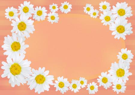 oxeye雏菊与拷贝空间在橙色和桃红色背景被安排形成框架或花环,五颜六色的背景,卡片概念