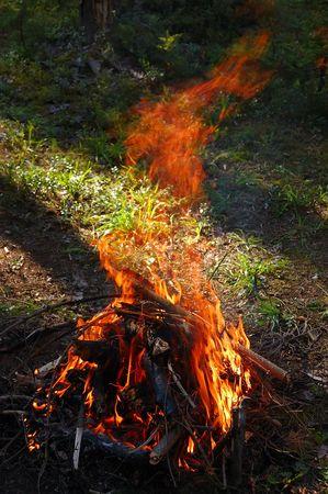 Fire in wood