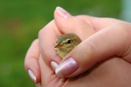caring hands: Wilde vogels in verzorgende handen Stockfoto