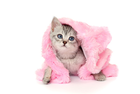 pink fur: Kitten in a pink fur coat. Isolated on a white
