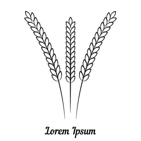 spillage: Vector de tres trigo espiguilla sobre fondo blanco.