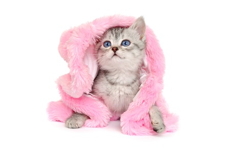 pink fur: Little Kitten in a Pink Fur Coat on a white background