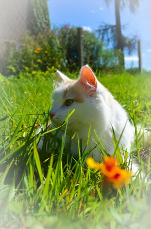 the cat has a rest on a green grass photo