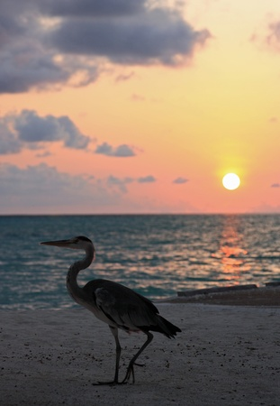 heron end sunset Stock Photo - 12080962