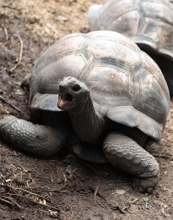 turtle of seychelles Stock Photo - 12322435