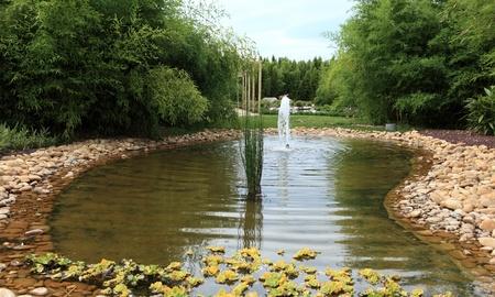 bamboo fountain: water garden