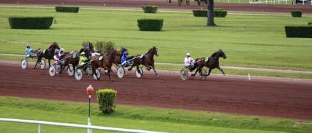 trotting: horse racing Editorial