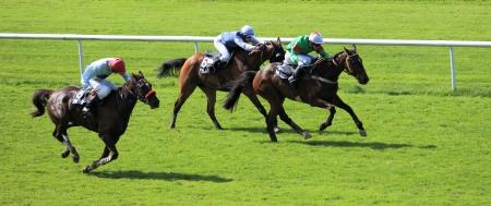 punter: horse racing Editorial