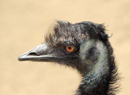 emu: em�