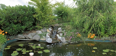 aquatic garden pond photo