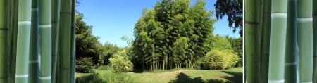 triptico: tríptico sobre el tema de bambú Foto de archivo