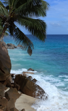 wild beach of seychelles Stock Photo - 17603441