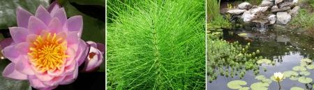 triptico: verde tríptico