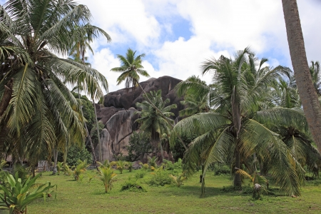 copra: tropical landscape Stock Photo