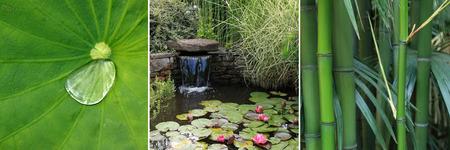 triptico: jardín acuático tríptico Foto de archivo