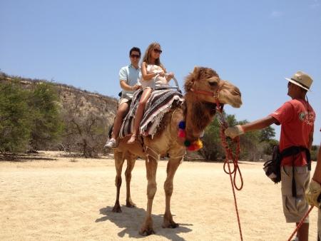 Camel tour in cabo