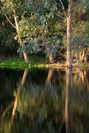 reflects: This cool calm river reflects the lush bushland surrounds