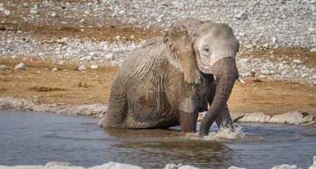 waterhole: A young elephant taking a bath in the a waterhole in Africa Stock Photo