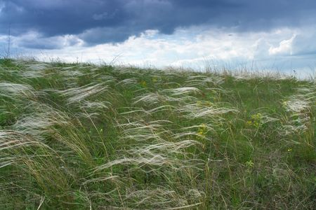 russia steppe: Flowering feather-grass in south region of Russia. Steppe hills befor rain