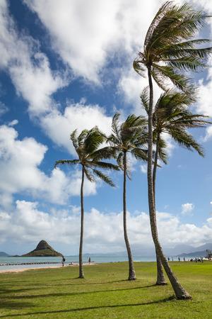 Kualoa 지역 공원 푸른 하늘과 구름과 야자수 불고 산들 바람이 화창한 날에 아름 다운 풍경. 오아후, 하와이, 미국.