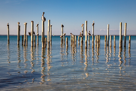 Pelicans resting on old pier pilings with a reflection in the clear blue harbor water. 스톡 콘텐츠 - 101473146