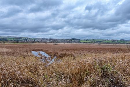Looking like a giant footprint on castle Semple Marshes on the Loch at Lochwinnoch in Scotland. 版權商用圖片