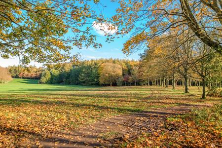 Eglinton Park in full autumn colours for Scotlands Winter October