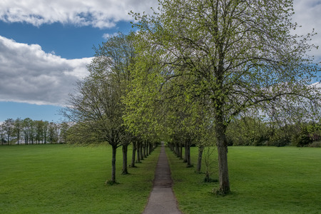 Eglinton Park at the start of summer in Scotland with its beautiful mature trees and its tree line path. Banco de Imagens