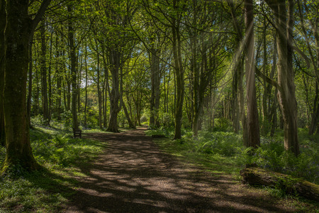 A well walked footpath through the centre of Fullerton Country Park at the start of summer as the trees are a lush green colour with bluebells on either side in Scotland. Banco de Imagens