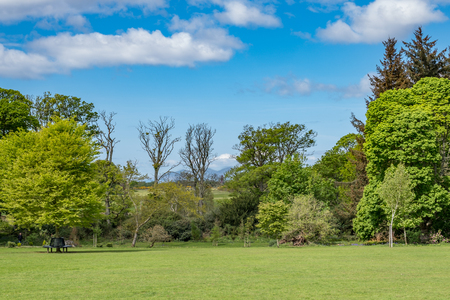 Looking Across Fullerton Country Park at the start of summer as the trees are a lush green colour in Scotland. Stok Fotoğraf