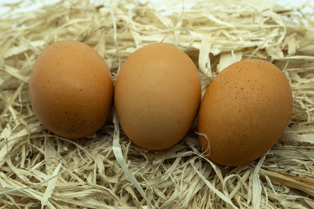 Three Fresh Eggs on a bed of straw in  natural light