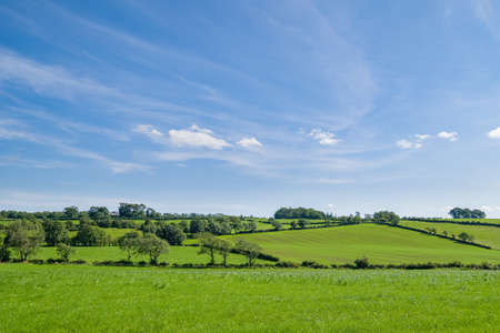 Ayrshire Fields behind the conservation village of Symington in South Ayrshire with green fields and trees at the centre of Robert Burns' country. 免版税图像