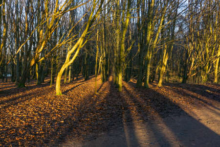 Eglinton Park in winter at the start of the year with its footpaths and stripped bare trees and elongated shadows caused by the end of day sunlight.