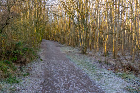 Eglinton Park in winter at the start of the year with its footpaths and stripped bare trees with the evening light from sunset.