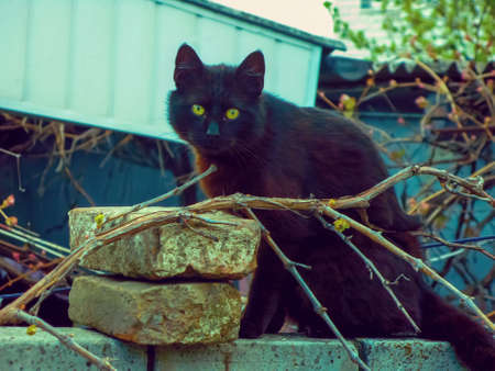 A domestic black cat with yellow magnetic eyes sits on a brick fence. Serious and attentive look of a black cat with yellow eyes.