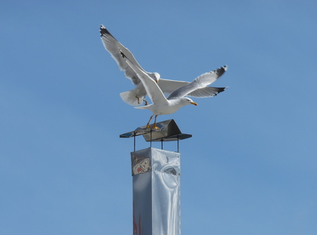 descender: Seagulls at the top of the chimney