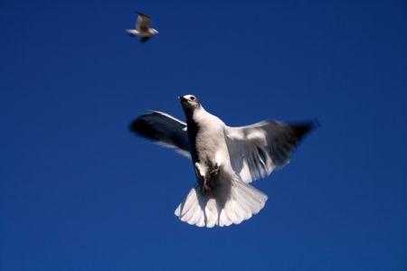 when: When the sea gulls attack Stock Photo