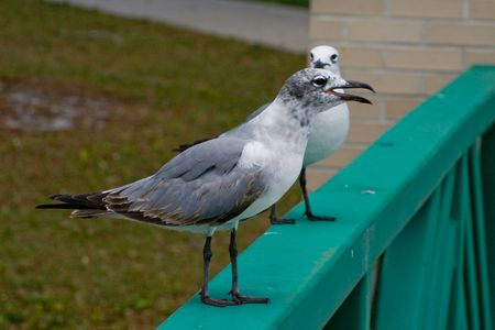 A couple of seagulls sitting on a railing