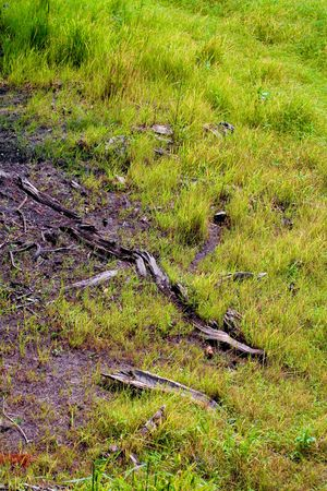 lea: The remnants of a decaying tree trunk  in the grass with a snail shell (thank you for putting me back) Stock Photo