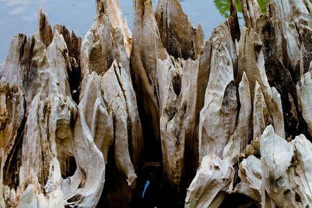 Closeup of the remains of a cypress tree riverside Banco de Imagens