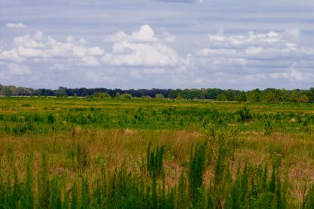 lea: Large field with clumps of various plants and grasses. Trees in the far distance. Stock Photo