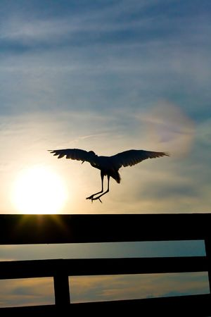 White heron (great egret) landing on pier railing against sunset photo